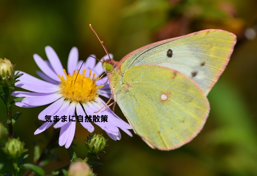 150905ウトナイ湖 (1)