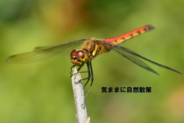 150905ウトナイ湖 (3)