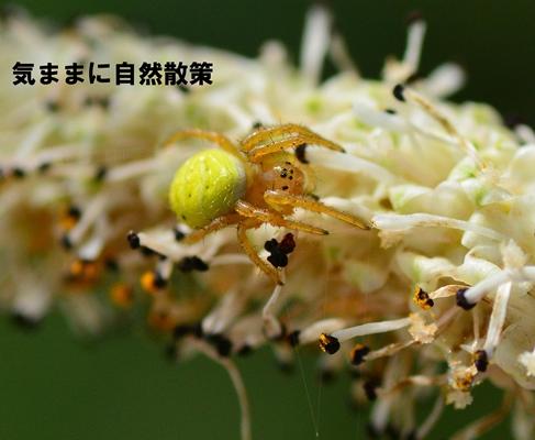 150905ウトナイ湖 (4)