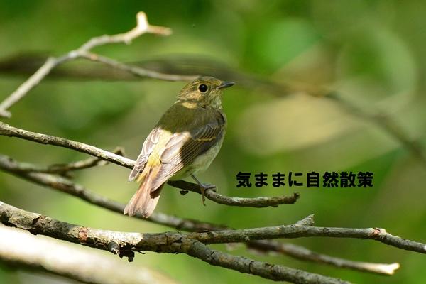 150905ウトナイ湖 (5)