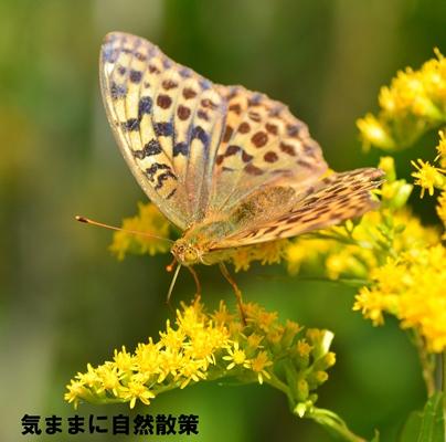 150905ウトナイ湖 (7)