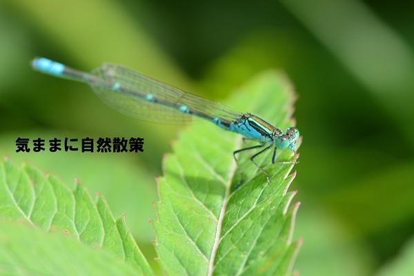 150905ウトナイ湖 (9)
