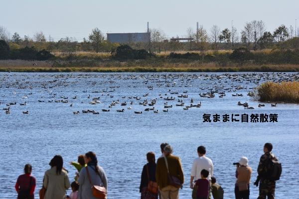 秋のウトナイ湖 (2)
