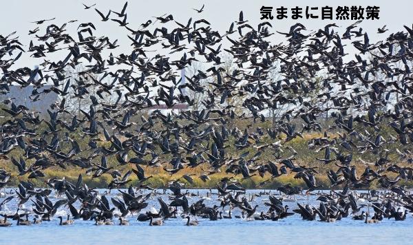 秋のウトナイ湖 (1)