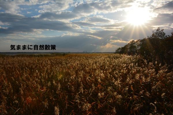 秋のウトナイ湖 (10)