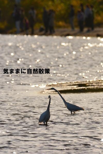 秋のウトナイ湖 (3)a
