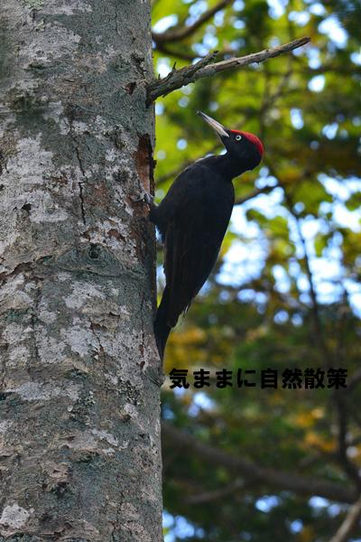 秋の研究林 (1)