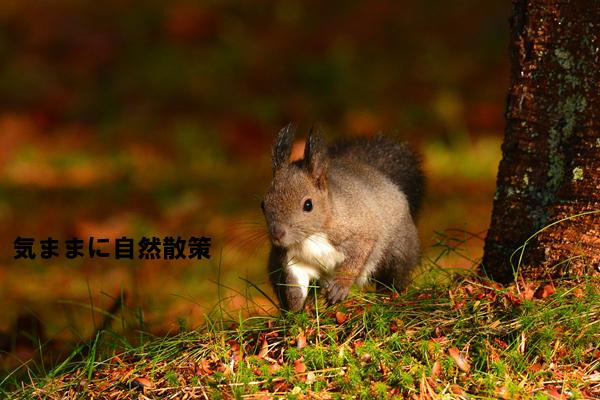 秋の研究林 (2)
