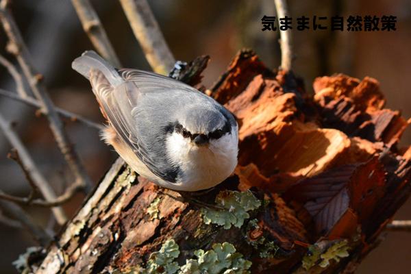 秋の研究林 (3)