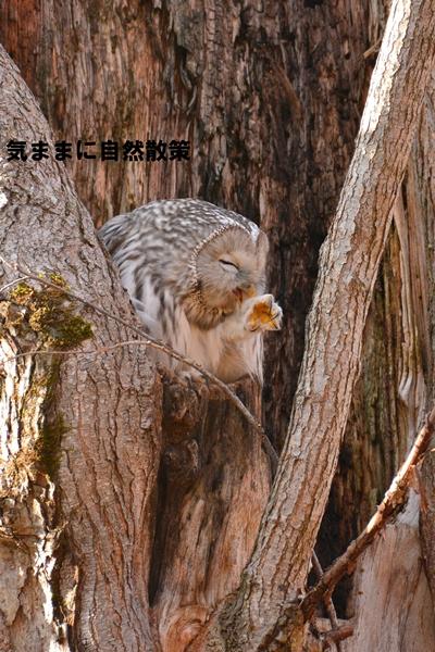 秋の研究林 (5)