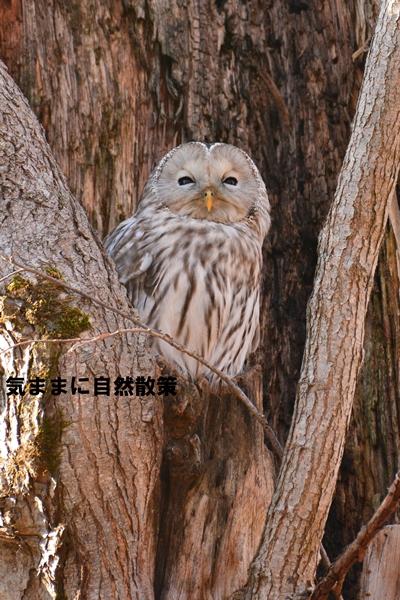 秋の研究林 (6)