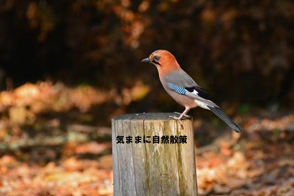 秋の研究林 (7)