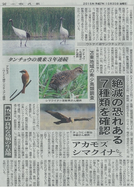 勇払鳥類調査>苫小牧民報(151030) - コピー