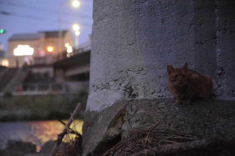 夜猫/川上