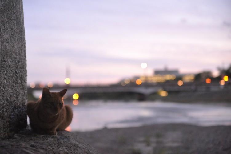 夜猫/川下