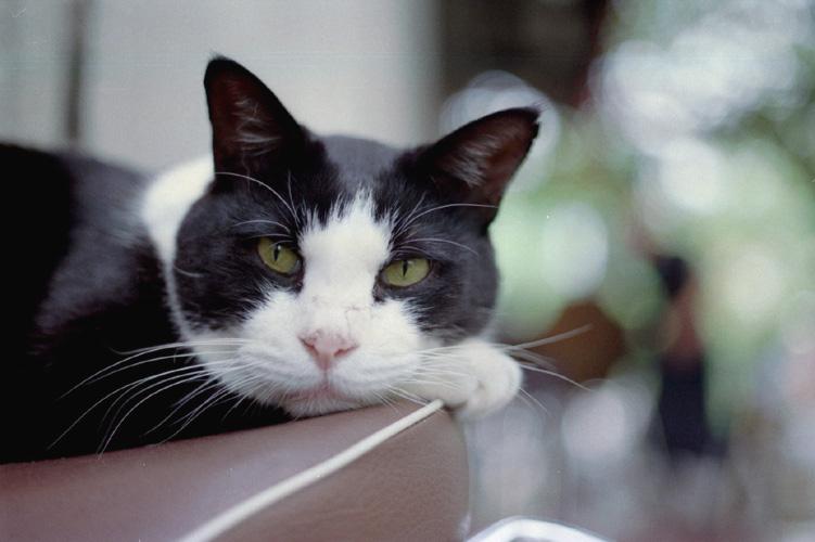接写猫視線