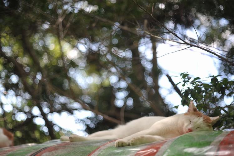秋猫/午睡