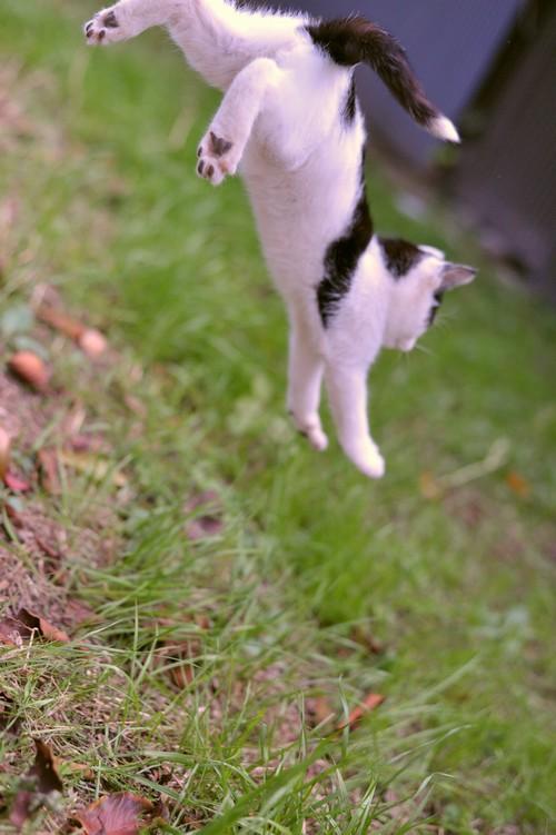 チビ猫ジャンプ!