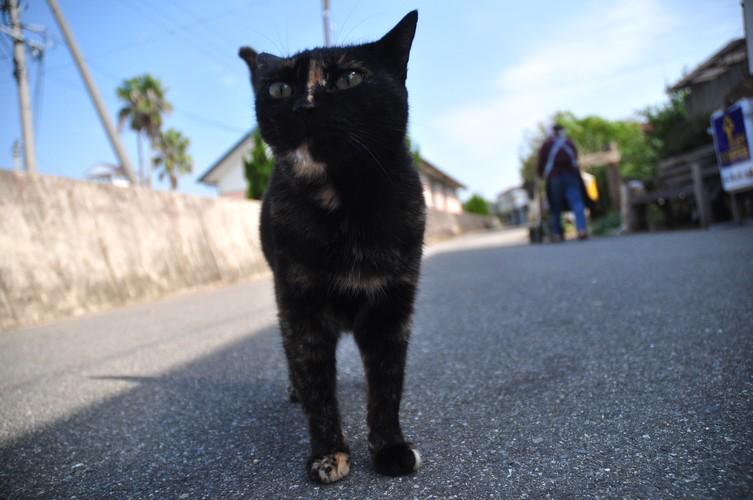 第一豊島猫