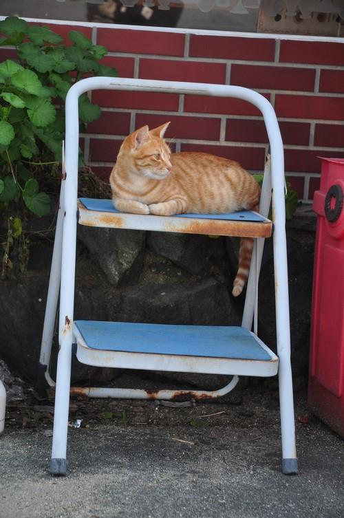 第二豊島猫