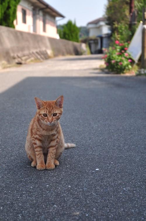 茶トラの仔猫