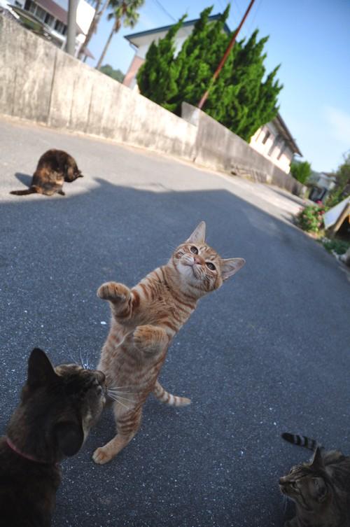 猫と遊ぼう