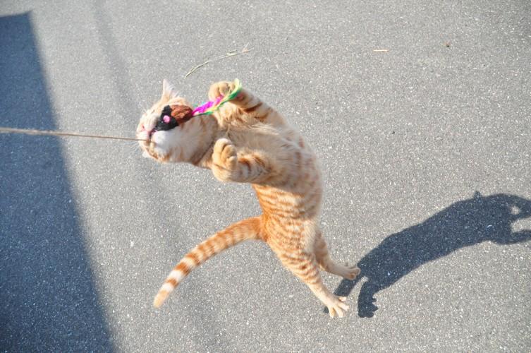 猫ジャンプ!?