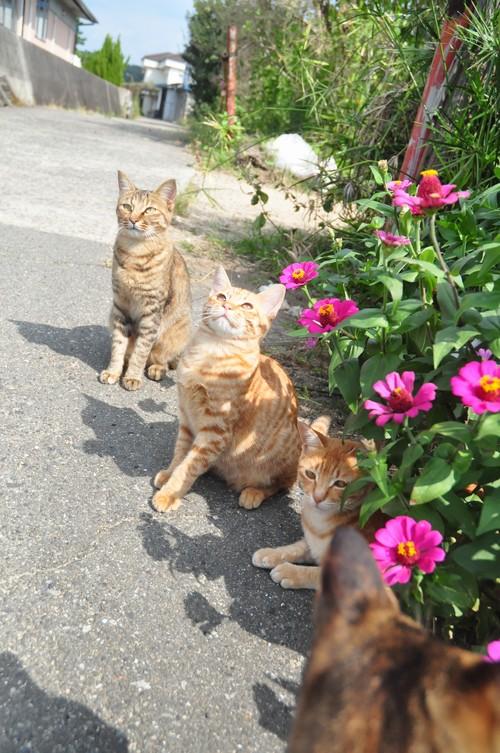 豊島猫再び
