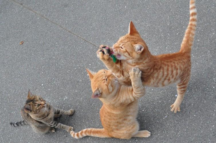猫と遊びまくり