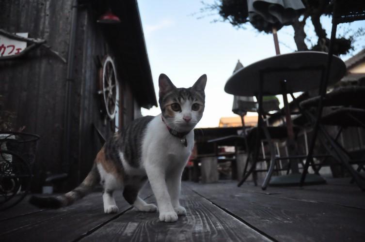 第二直島猫