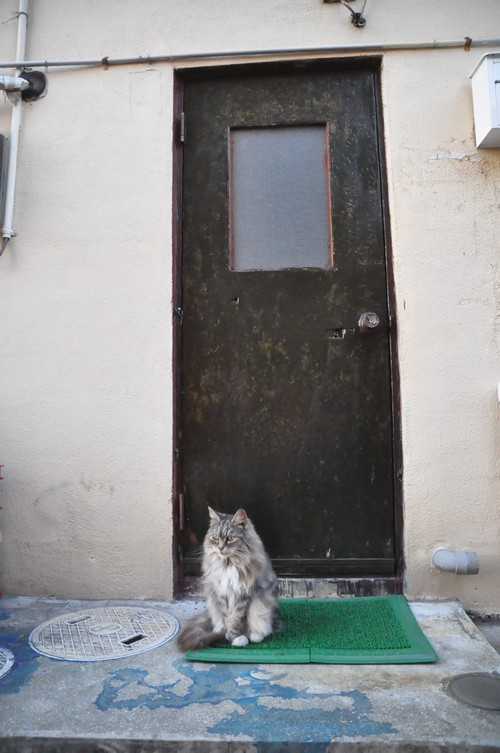 第三直島猫