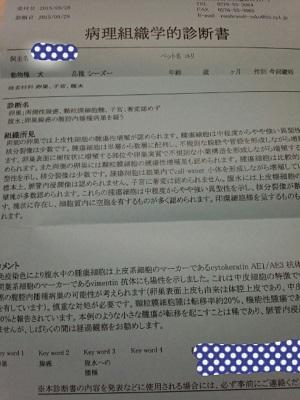 yuri1002 (2)