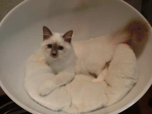 5月生まれ子猫 里親募集
