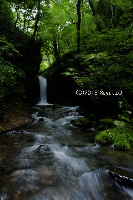 DSCF4187.jpg