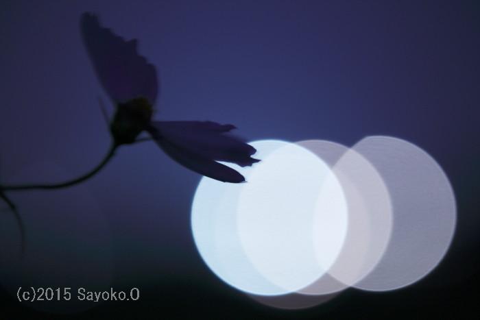 _F4A1029-1.jpg