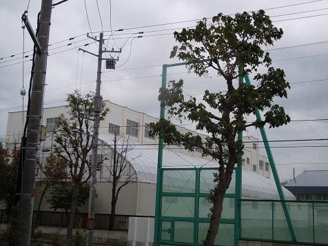 DSCN9362.jpg