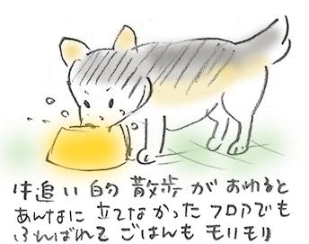 5hopashikoshi.jpg