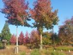 南丹PAの紅葉