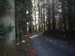 仁和寺への小路1