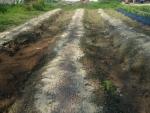 米糠と化成肥料を撒いて
