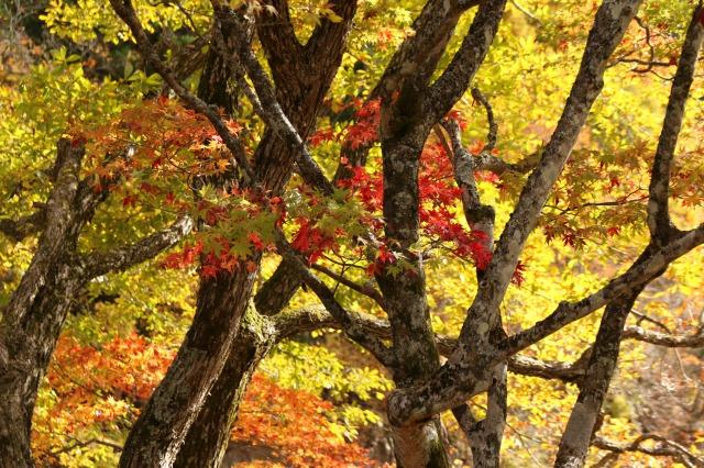 りんご刈り 高山 045