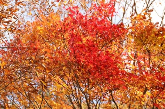 りんご刈り 高山 051