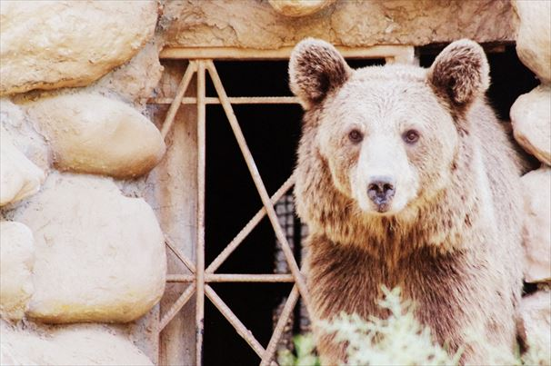 テヘラン動物園 (3)
