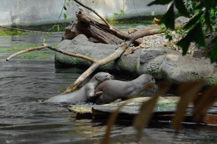 プラハ動物園 (7)_R