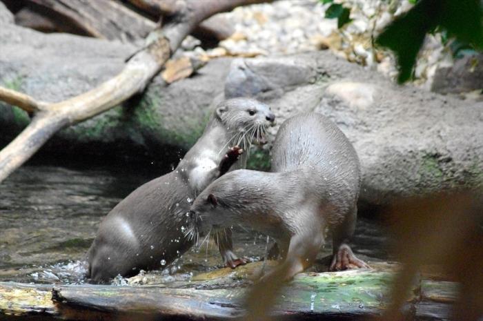 プラハ動物園 (8)_R