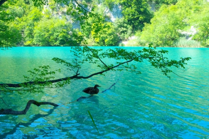 プリトヴィツェ湖群国立公園 (87)