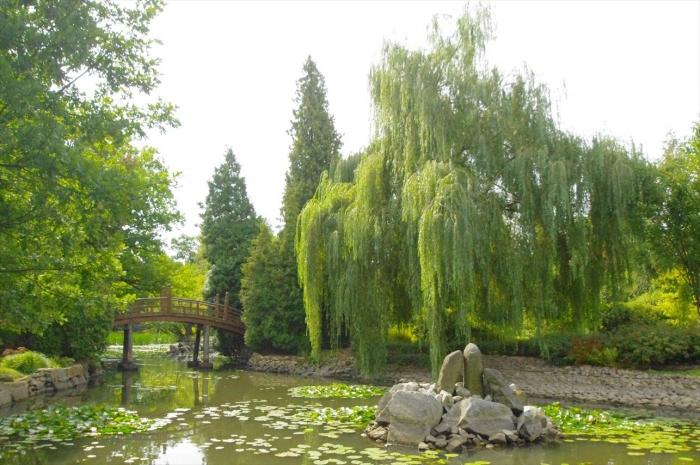 ヴロツワフ日本庭園 (7)