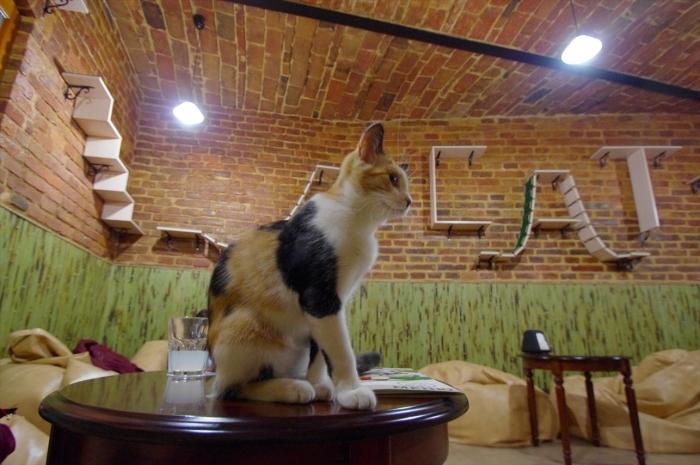 リヴィウの猫カフェ (5)
