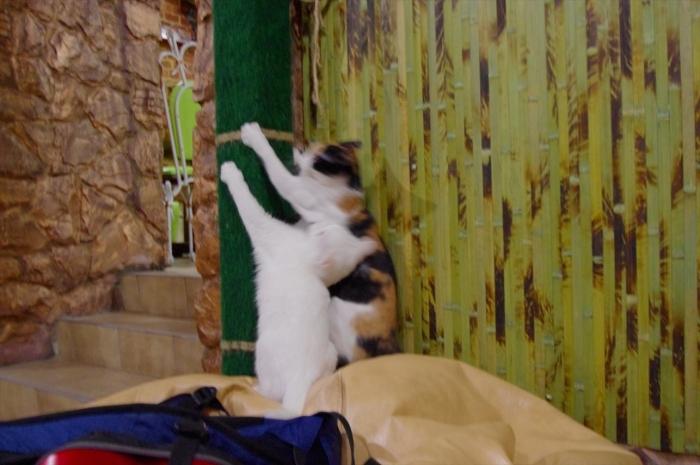 リヴィウの猫カフェ (14)