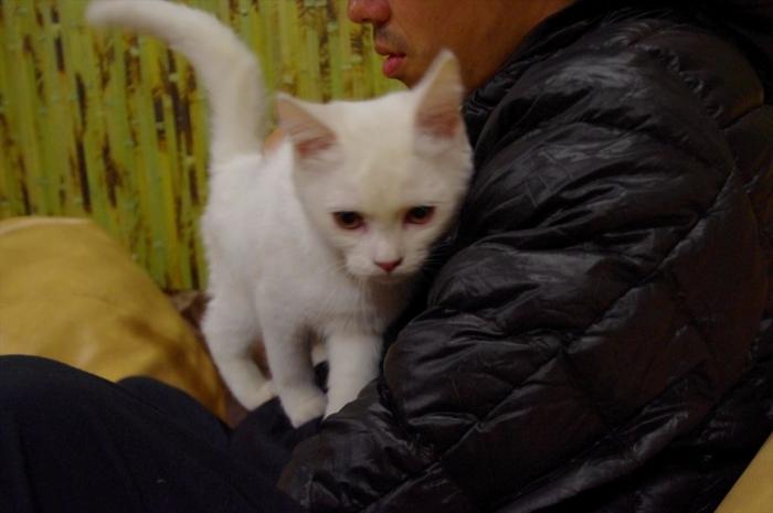 リヴィウの猫カフェ (25)